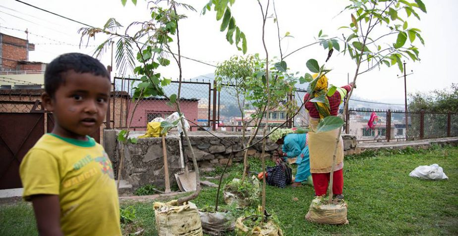 FRUIT TREES ON SCHOOL´S GROUND IN NEPAL